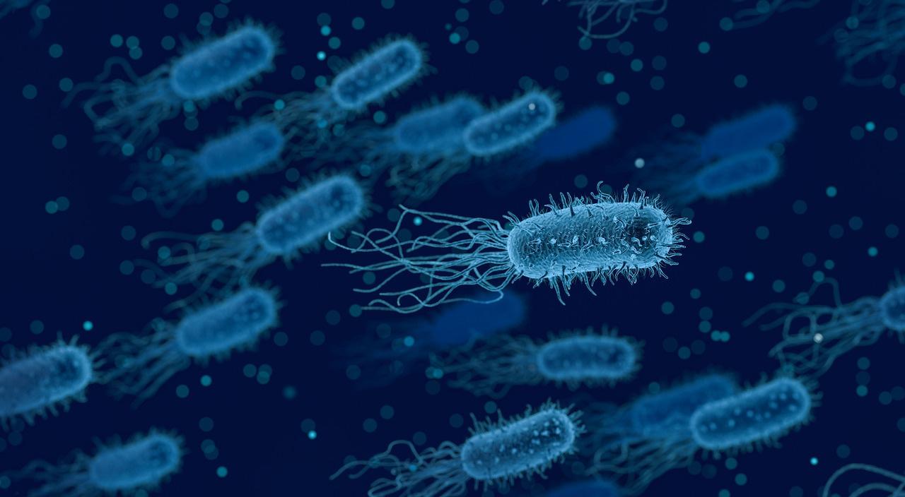 Prebiotics and Your Immunity